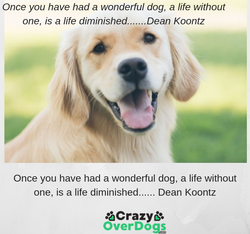 Once you have had a wonderful dog, a life without one, is a life diminished...... Dean Koontz