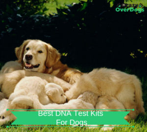 Best DNA Test Kits For Dogs