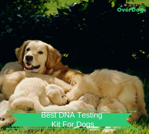 best dna testing kits for dogs