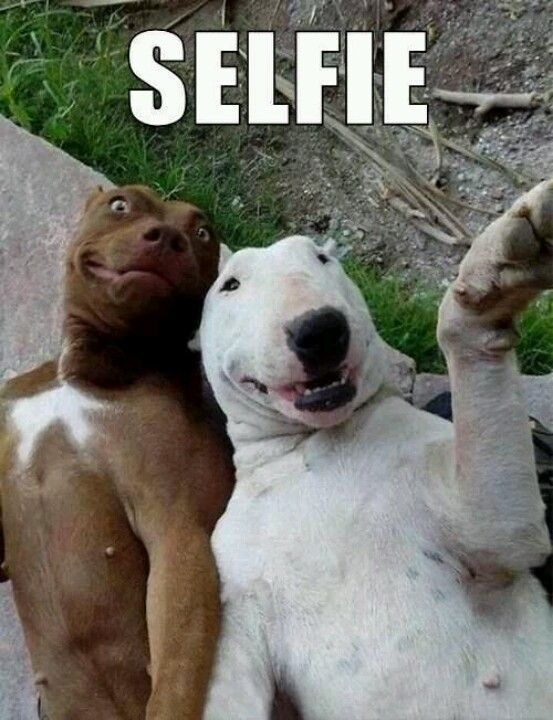 cute funny dog pictures