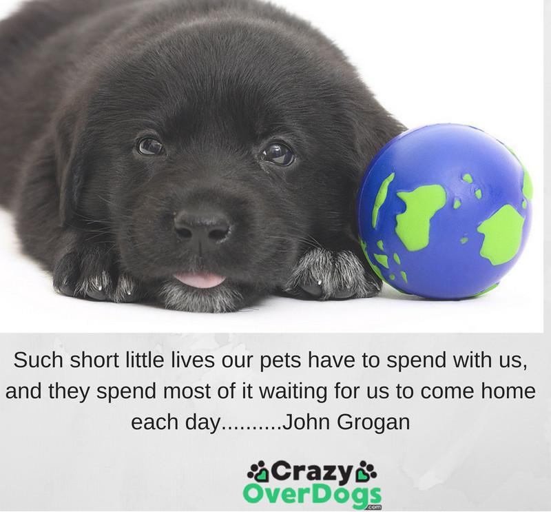 inspirational dog quotes