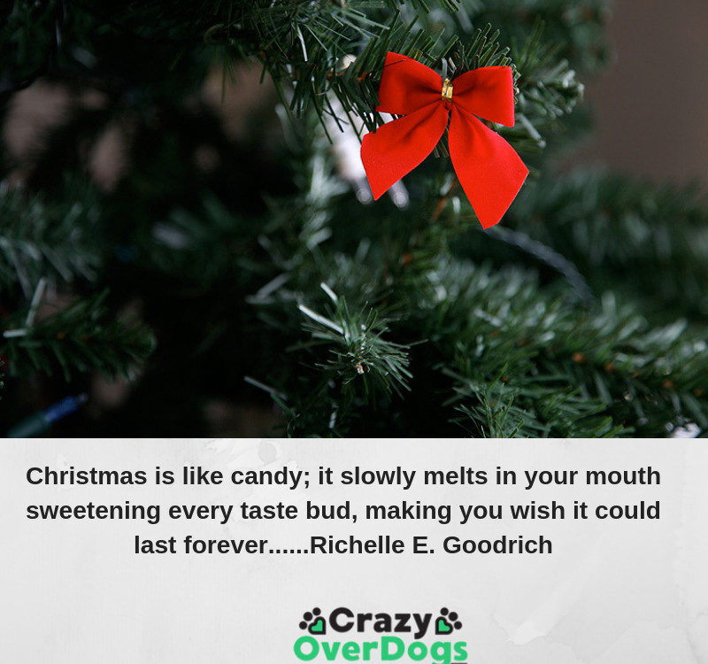 Christmas is like candy; it slowly melts in your mouth sweetening every taste bud, making you wish it could last forever......Richelle E. Goodrich