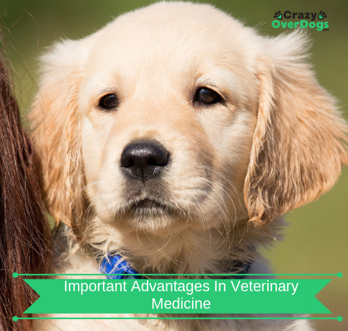 Discover Important Advantages In Veterinary Medicine