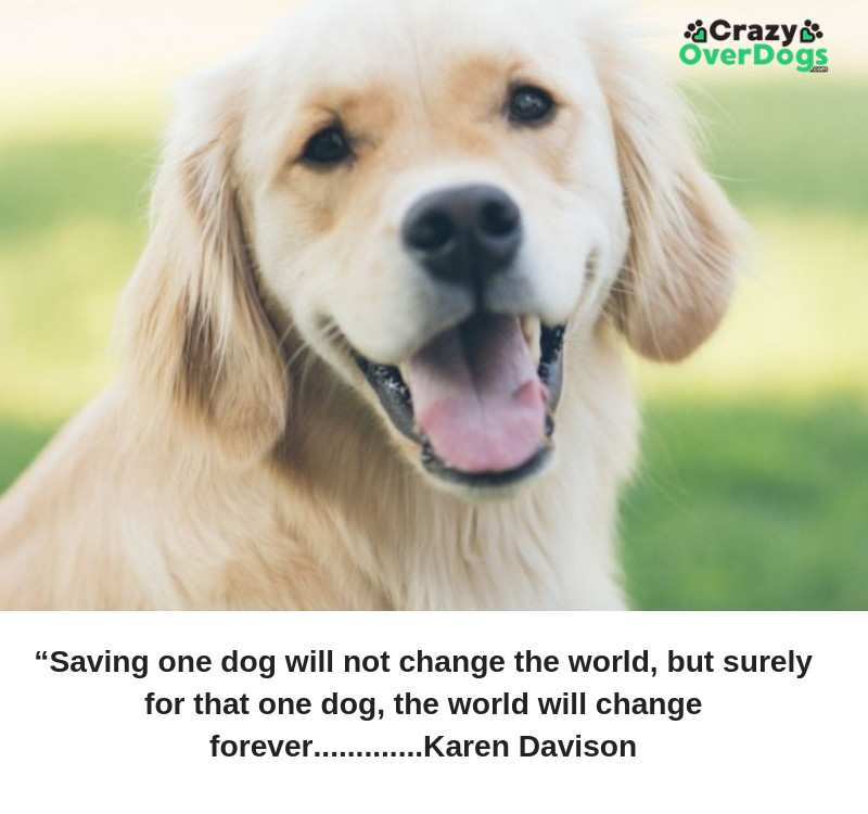 """Saving one dog will not change the world, but surely for that one dog, the world will change forever."" Karen Davison"