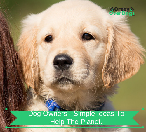 Dog Lovers - What Can You Do To Save The Planet