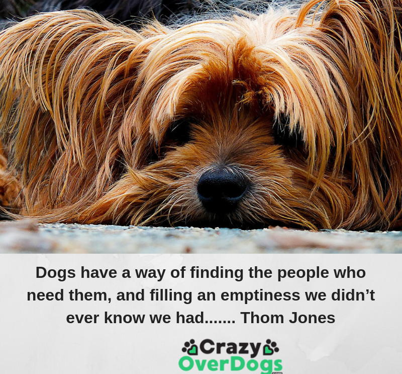 Dogs have a way of finding the people who need them, and filling an emptiness we didn't know we had..........Thom Jones