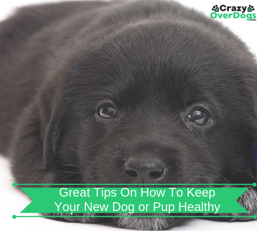 Great Tips On How To Keep Your New Dog or Pup Healthy