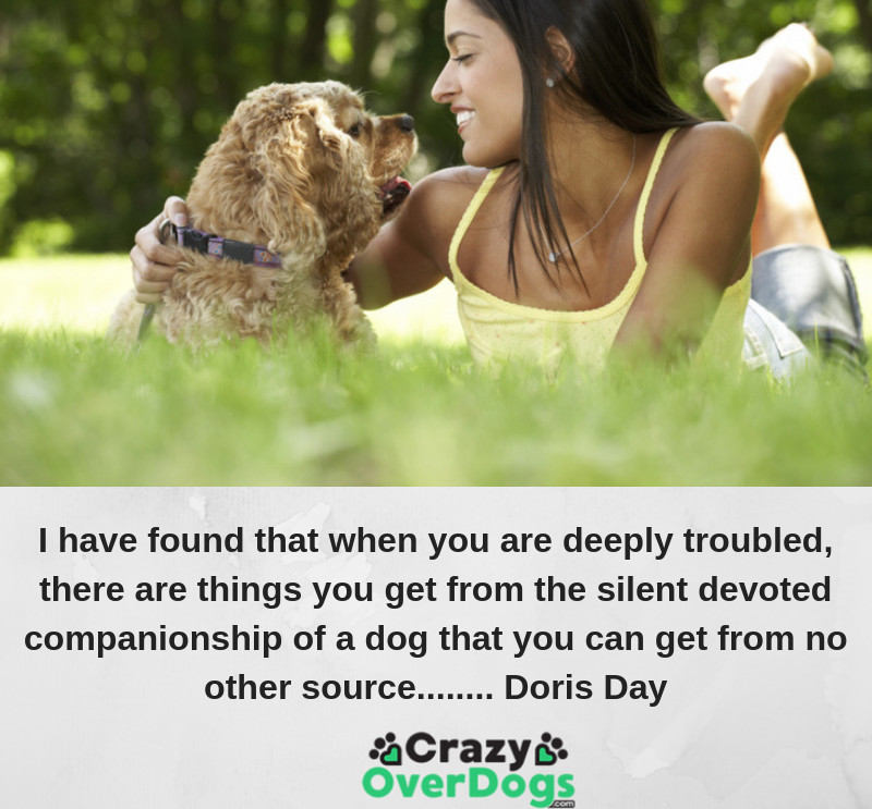 I have found that when you are deeply troubled, there are things you get from the silent devoted companionship of a dog that you can get from no other source........ Doris Day
