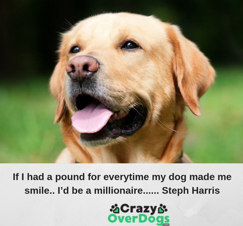 If I had a pound for every time my dog made me smile. I'd be a millionaire...... Steph Harris
