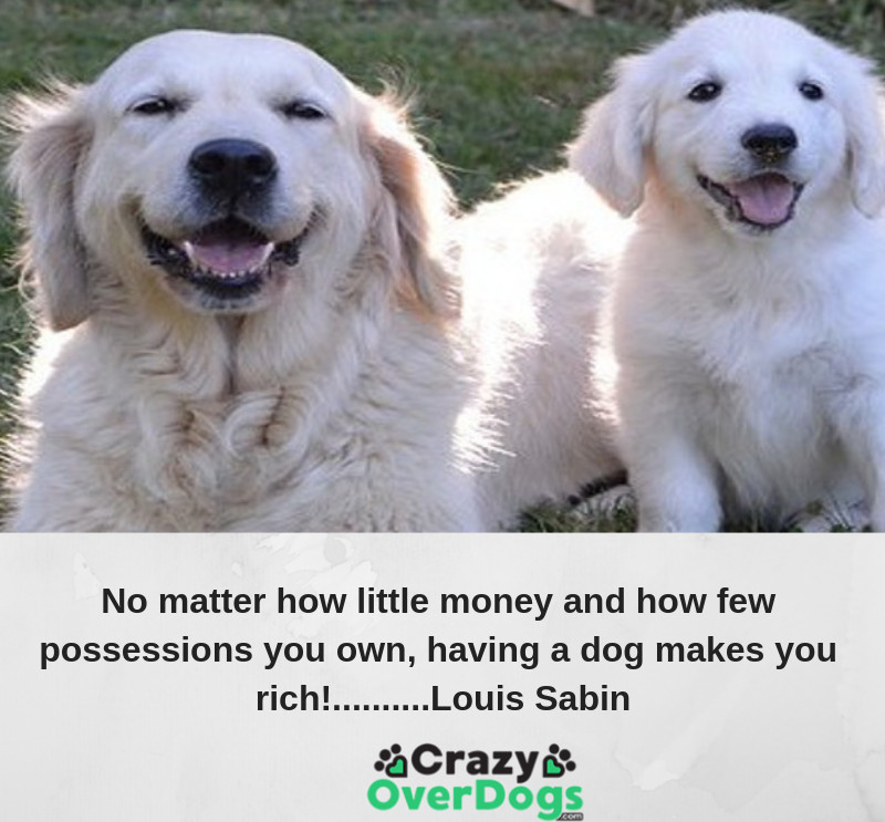 No matter how little money and how few possessions you own, having a dog makes you feel rich........... Louis Sabin