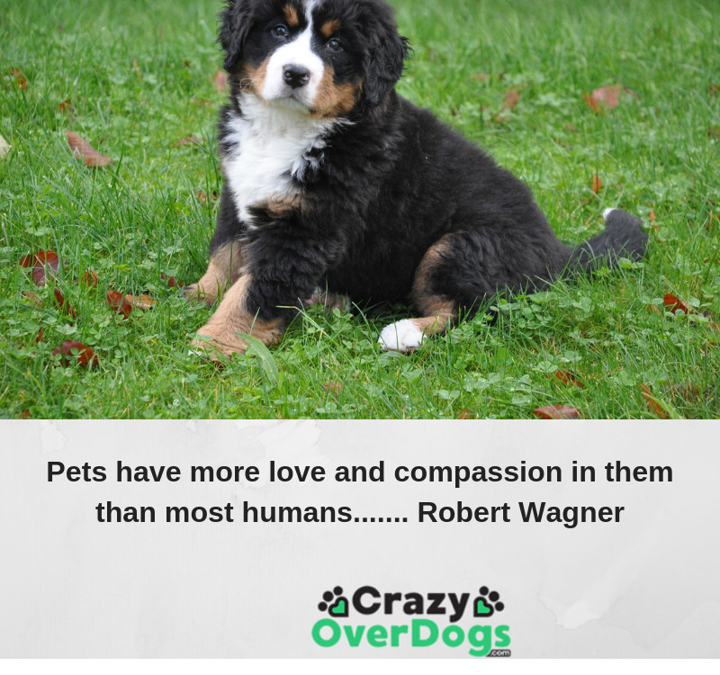 Pets have more love and compassion in them than most humans....... Robert Wagner
