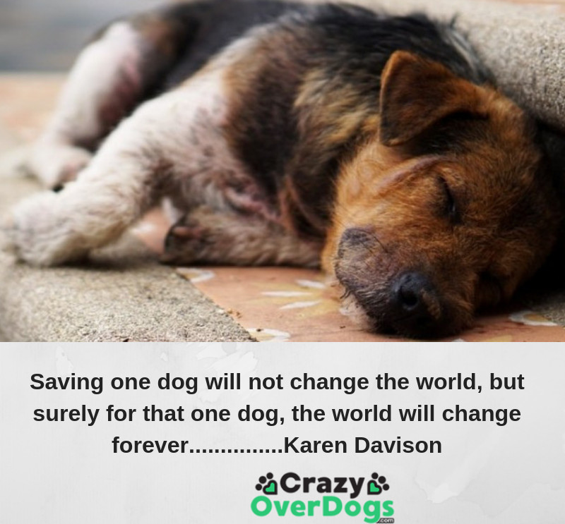 Saving one dog will not change the world, but surely for that one dog, the world will change forever.......... Karen Davison