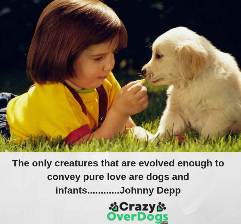 The only creatures that are evolved enough to convey pure love are dogs and infants..........Johnny Depp