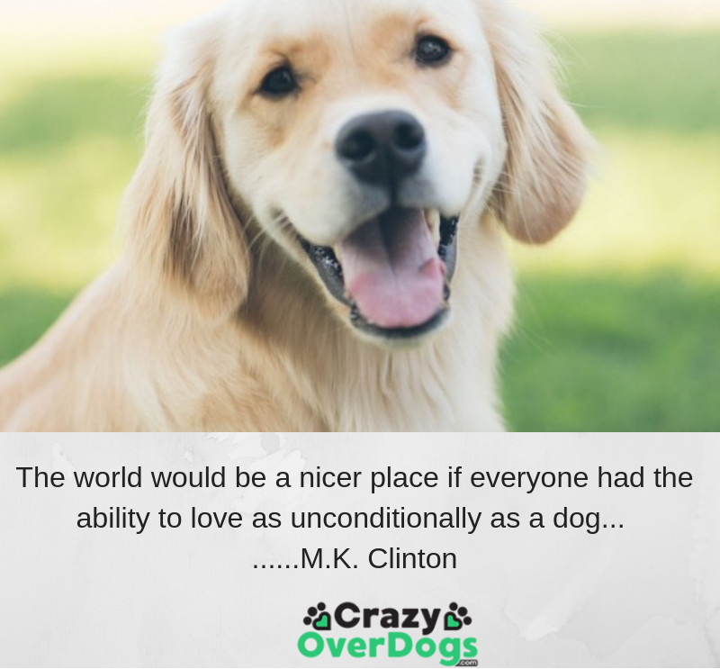 The world would be a nicer place if everyone had the ability to love as unconditionally as a dog......... M.K. Clinton