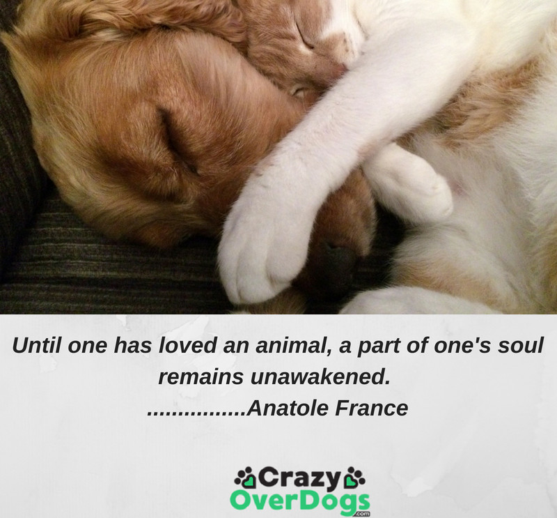 Until one has loved an animal, a part of one's soul remains unawakened.................Anatole France