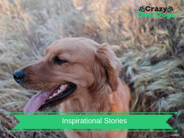 Inspirational Dog Stories