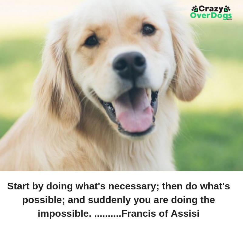 inspirational video quote for dog lovers