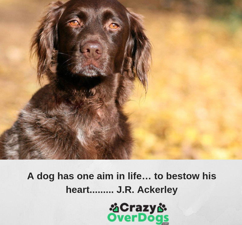 A dog has one aim in life..to bestow his heart.......J.R. Ackerley