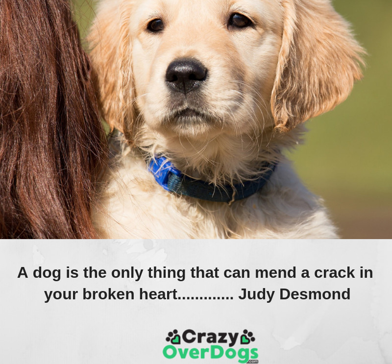 A dog is the only thing that can mend a crack in your broken heart.........Judy Desmond