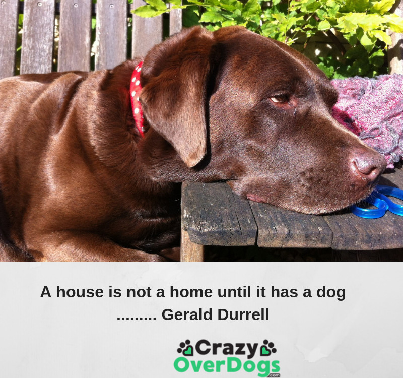 A house is not a home until it has a dog......... Gerald Durrell