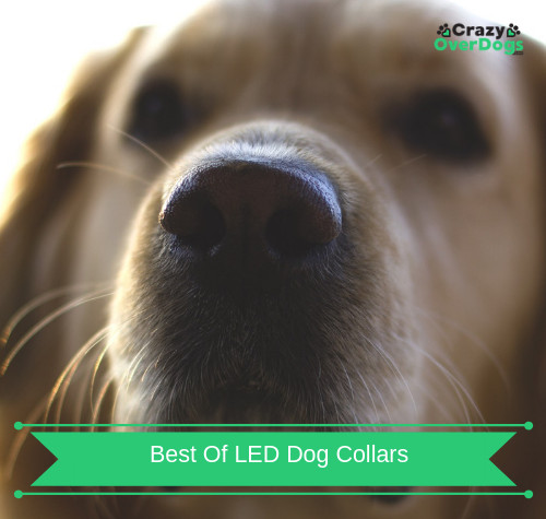 Best of LED Collars