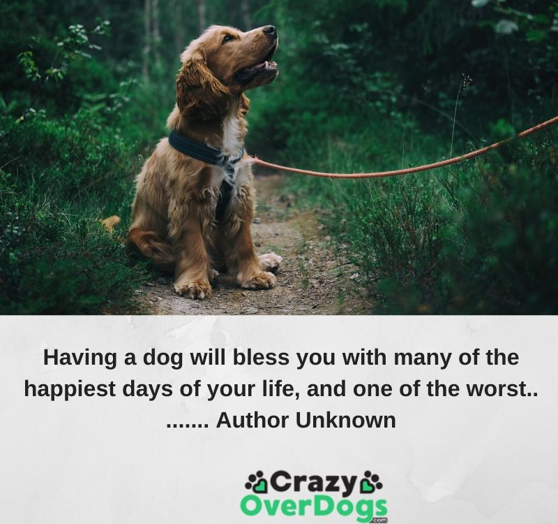 Having a dog will bless you with many of the happiest days of your life, and one of the worst.... Author Unknown