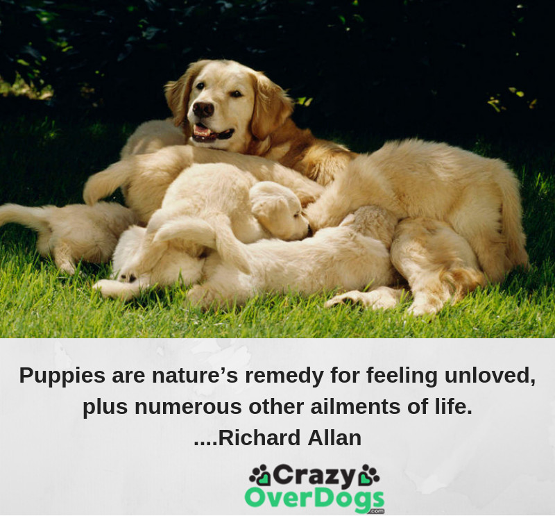 Puppies are nature's remedy for feeling unloved, plus numerous other ailments of life.....Richard Allan