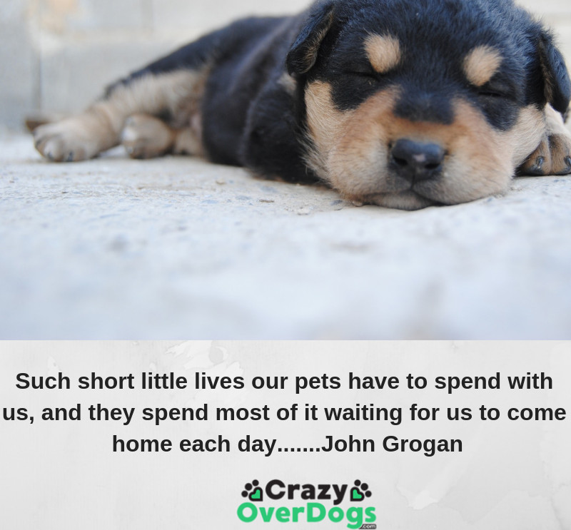 Such short little lives our pets have to spend with us, & they spend most of it waiting for us to come home each day............ John Grogan