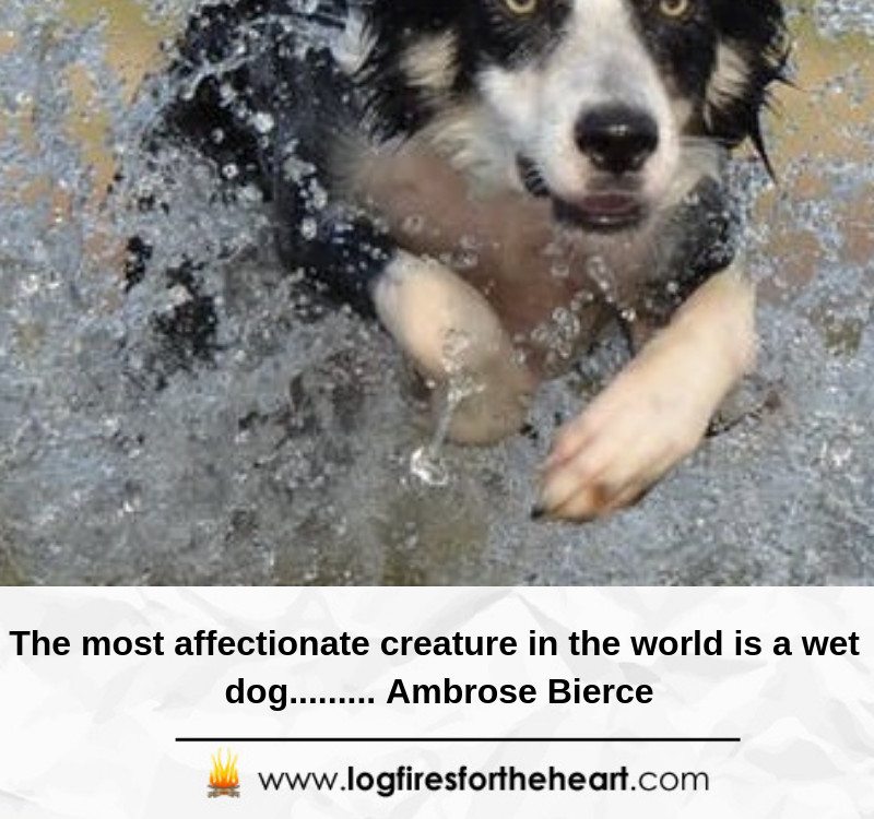 The most affectionate creature in the world is a wet dog......... Ambrose Bierce