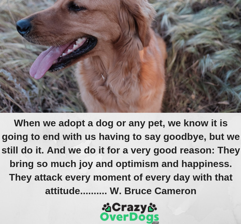 When we adopt a dog or any pet, we know it is going to end with us having to say goodbye, but we still do it. And we do it for a very good reason: They bring so much joy and optimism and happiness. They attack every moment of every day with that attitude.......... W. Bruce Cameron