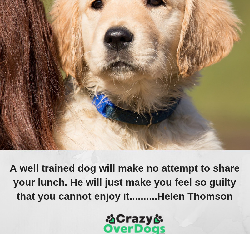 A well trained dog will make no attempt to share your lunch. He will just make you feel so guilty that you cannot enjoy it..........Helen Thomson