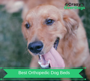 Best Orthopedic Dog Beds in 2019 – Help Arthritis | Joint Problems