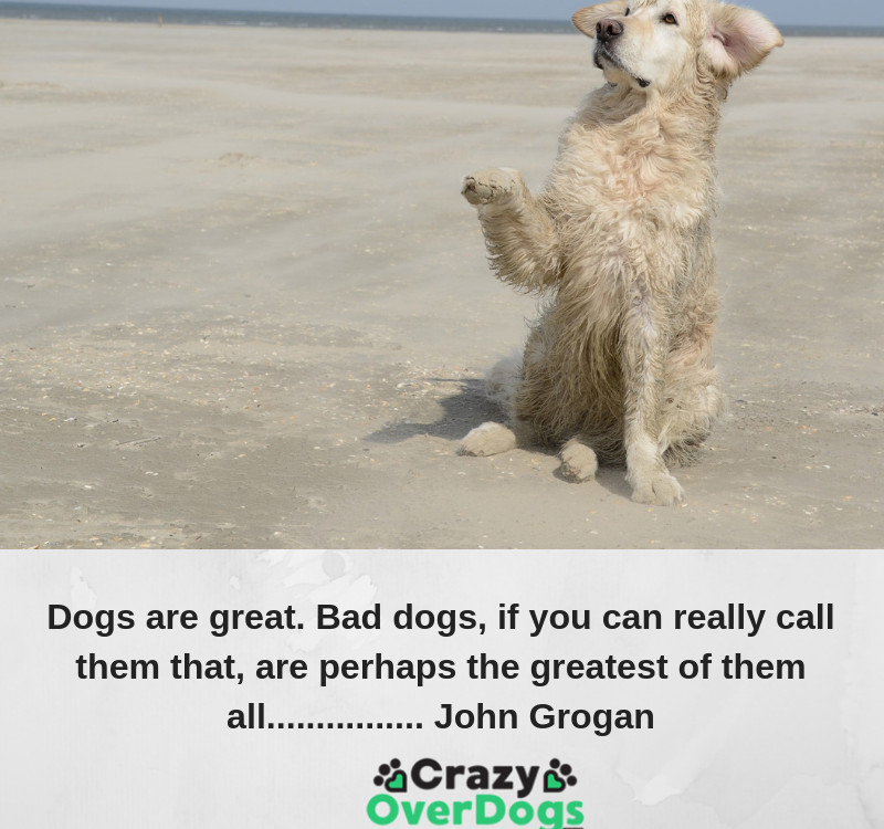 Dogs are great. Bad dogs, if you can really call them that, are perhaps the greatest of them all................ John Grogan