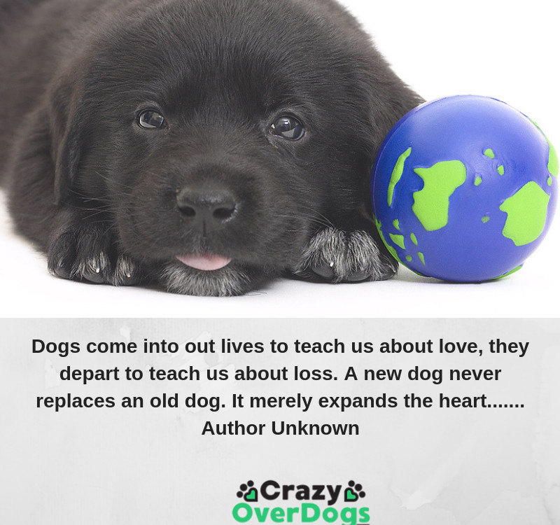 Dogs come into our lives to teach us about love, they depart to teach us about loss. A new dog never replaces an old dog. It merely expands the heart.......... Author Unknown