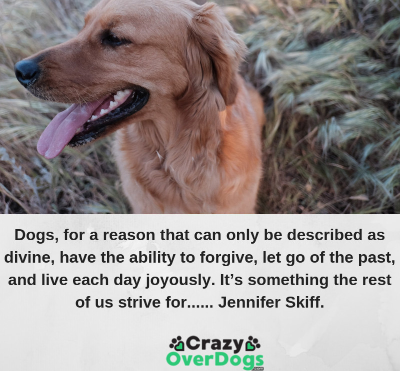 Dogs, for a reason that can only be described as divine, have the ability to forgive, let go of the past, and live each day joyously. It's something the rest of us strive for...... Jennifer Skiff.