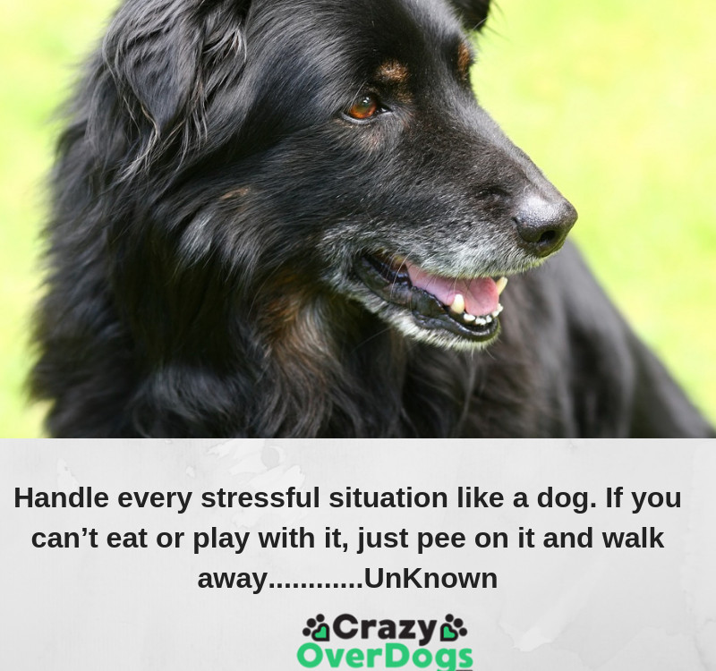 Handle every stressful situation like a dog. If you can't eat or play with it, just pee on it and walk away............UnKnown