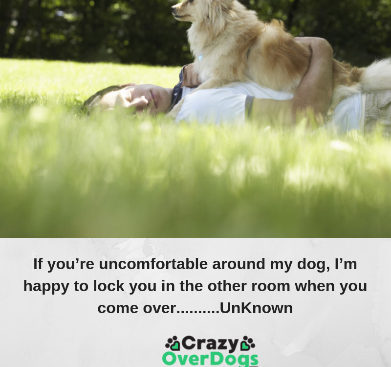 If you're uncomfortable around my dog, I'm happy to lock you in the other room when you come over..........UnKnown