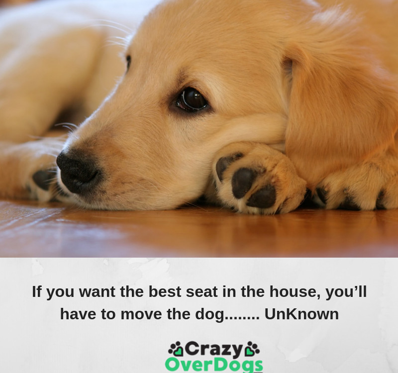 If you want the best seat in the house, you'll have to move the dog........ UnKnown