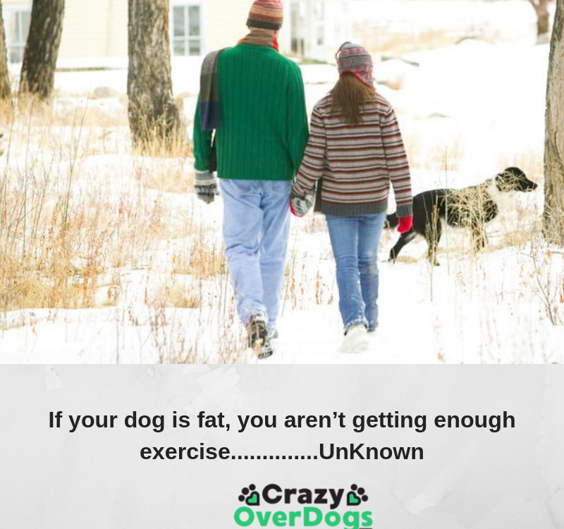 If your dog is fat, you aren't getting enough exercise..............UnKnown