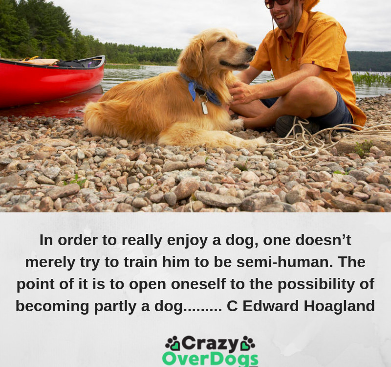 In order to really enjoy a dog, one doesn't merely try to train him to be semi-human. The point of it is to open oneself to the possibility of becoming partly a dog......... C Edward Hoagland