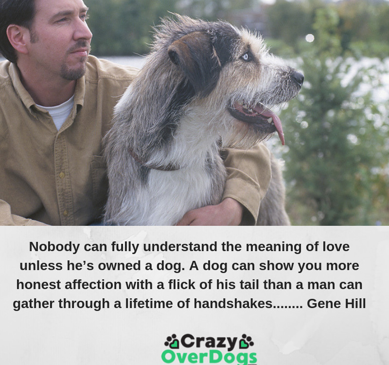 Nobody can fully understand the meaning of love unless he's owned a dog. A dog can show you more honest affection with a flick of his tail than a man can gather through a lifetime of handshakes........ Gene Hill
