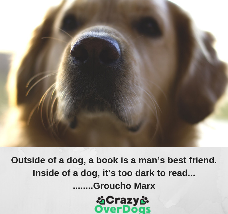 Outside of a dog, a book is a man's best friend. Inside of a dog, it's too dark to read........ Groucho Marx