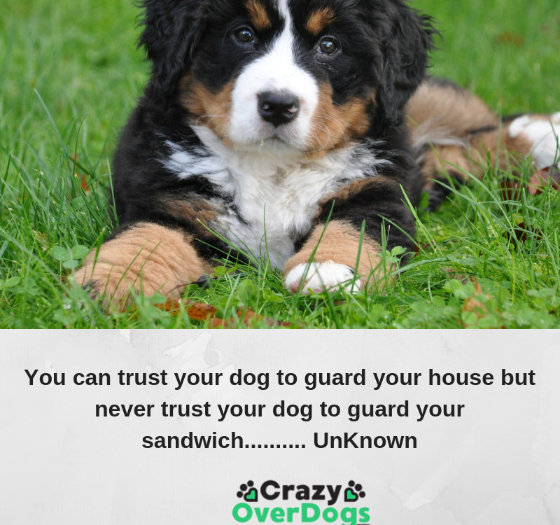 You can trust your dog to guard your house but never trust your dog to guard your sandwich.......... UnKnown