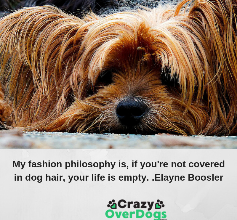My fashion philosophy is, if you're not covered in dog hair, your life is empty.