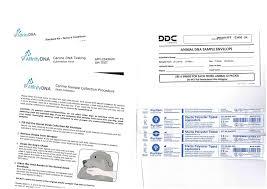 AffinityDNA Dog Degenerative Myelopathy (DM) DNA Test: