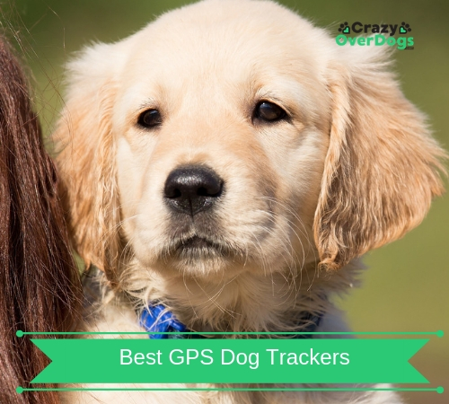 Best GPS Dog Trackers