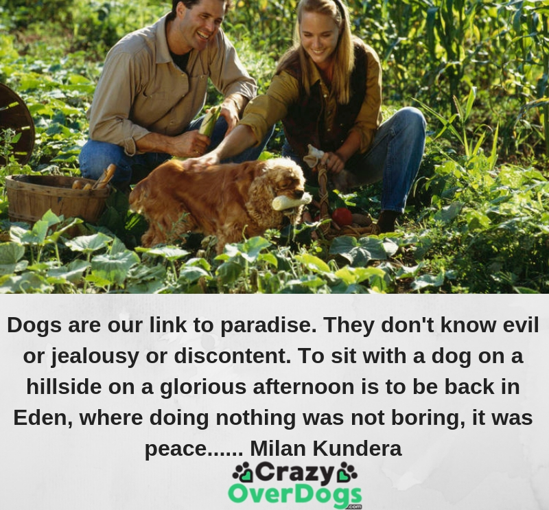 Dogs are our link to paradise. They don't know evil or jealousy or discontent. To sit with a dog on a hillside on a glorious afternoon is to be back in Eden, where doing nothing was not boring--it was peace...... Milan Kundera