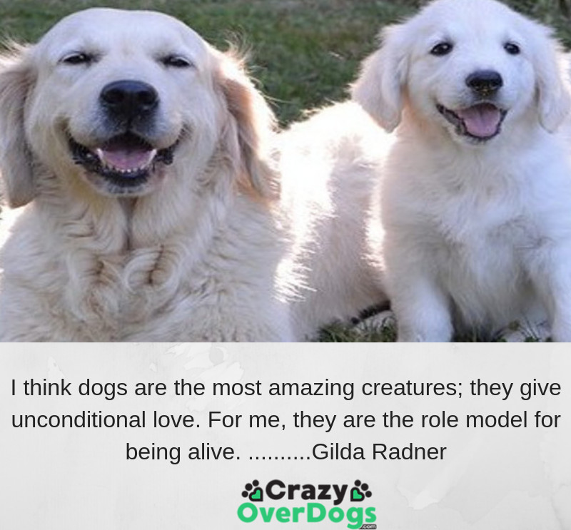 I think dogs are the most amazing creatures; they give unconditional love. For me, they are the role model for being alive........Gilda Radner