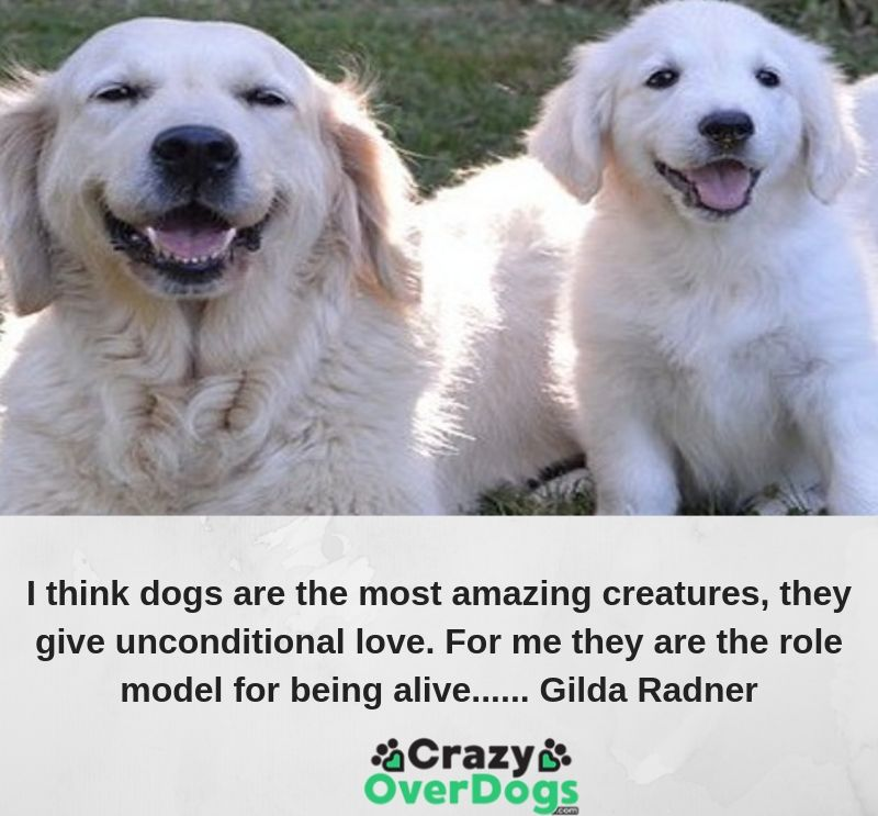 I think dogs are the most amazing creatures, they give unconditional love. For me they are the role model for being alive...... Gilda Radner