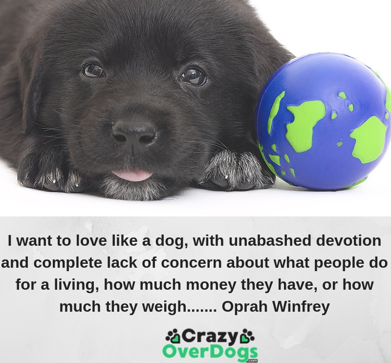 I want to love like a dog, with unabashed devotion and complete lack of concern about what people do for a living, how much money they have, or how much they weigh....... Oprah Winfrey